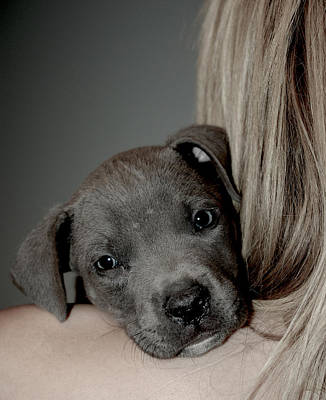 Janet Smith Photograph - Puppy Love by Janet Smith