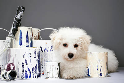 Paint Cans Photograph - Puppy Sitting Amongst Paint Tins by Martin Poole