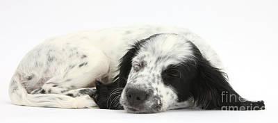 Puppy Sleeping Art Print by Mark Taylor