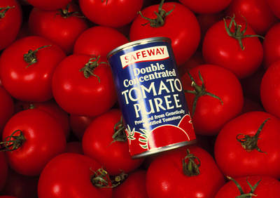 Tomato Puree Photograph - Puree Made From Genetically-engineered Tomatoes by Volker Steger