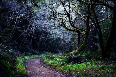 Photograph - Purisima Creek Trail by Matt Hanson