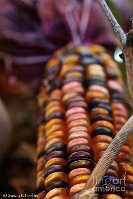 Photograph - Purple And Gold Corn by Susan Herber
