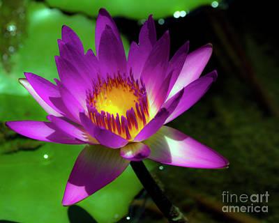 Photograph - Purple And Gold Three by Ken Frischkorn
