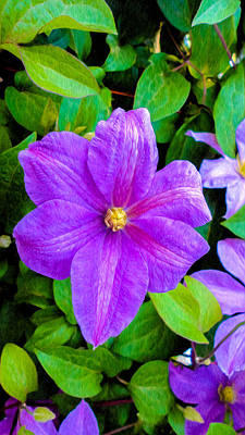 Purple And Green Original