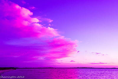 Photograph - Purple And Pink by Shannon Harrington