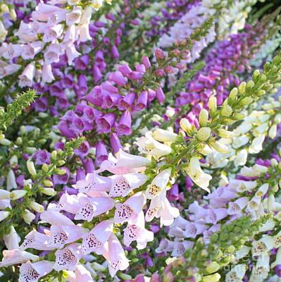 Purple And White Foxglove Square Art Print