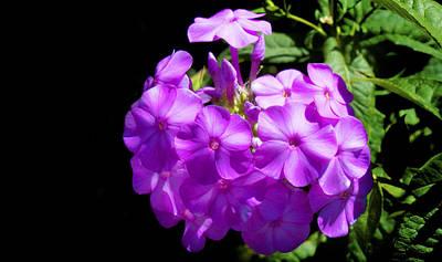 Photograph - Purple Art by Milena Ilieva