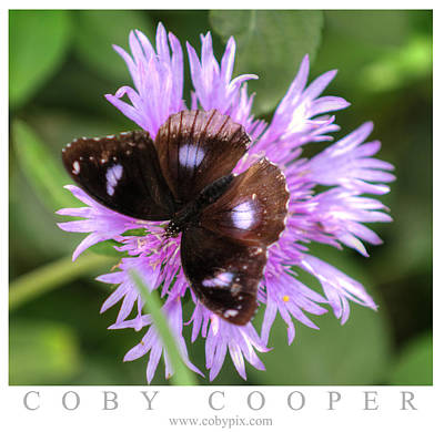 Photograph - Purple Camouflage  by Coby Cooper
