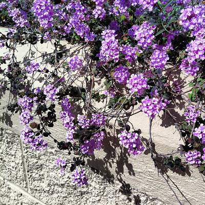 Photograph - Purple Cascade by Dawn Marie Black