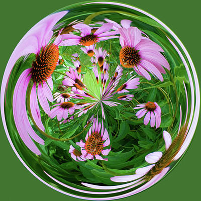 Photograph - Purple Coneflowers by Steve Stuller