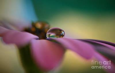 Purple Daisy Droplet Art Print by Kym Clarke