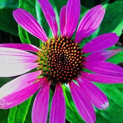 Floral Wall Art - Photograph - Purple Daisy Flower  by Irina Moskalev
