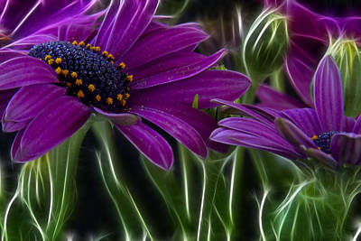 Abstract Flowers Royalty-Free and Rights-Managed Images - Purple Daisy by Stelios Kleanthous