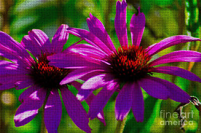 Photograph - Purple Daisy's by Donna Greene