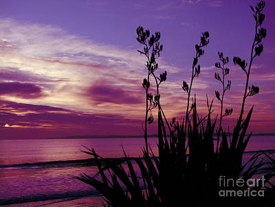 Photograph - Purple Dusk by Karen Lewis