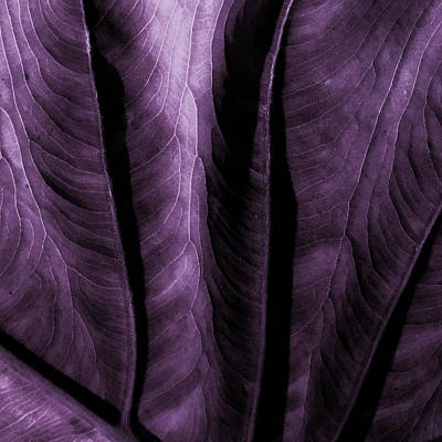 Plum Mixed Media - Purple Elephant Leaf by Bonnie Bruno