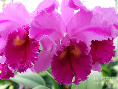 Art Print featuring the photograph Purple Explosion by Debbie Hart