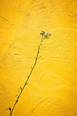 Weed Line Photograph - Purple Flower by Anya Brewley schultheiss