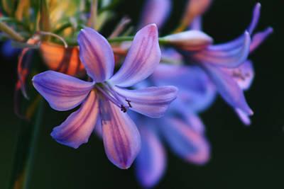 Photograph - Purple Flower by Cathie Douglas