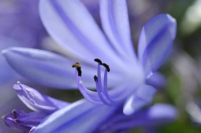 Photograph - Purple Flower Close-up by Sami Sarkis