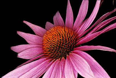 Photograph - Purple Flower by Cornelis Verwaal