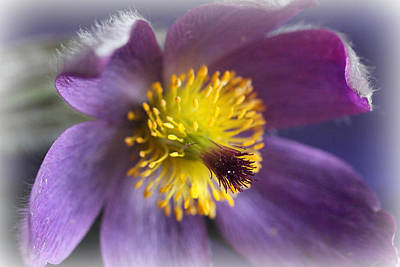 Photograph - Purple Flower Frosted by Mark J Seefeldt