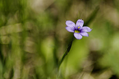 Photograph - Purple Flower by LeeAnn McLaneGoetz McLaneGoetzStudioLLCcom