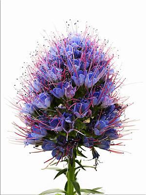 Photograph - Purple Flower by Fiona Messenger