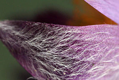 Photograph - Purple Flower Petal Macro by Mark J Seefeldt