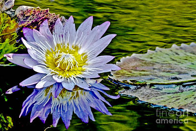 Purple Water Lily Art Print by Carol F Austin