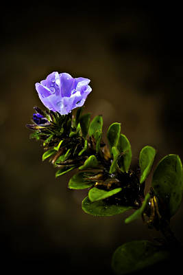 Purple Flower With Rain Drops Art Print