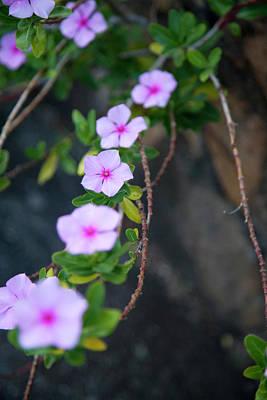 Ashlee Meyer Photograph - Purple Flowers  by Ashlee Meyer