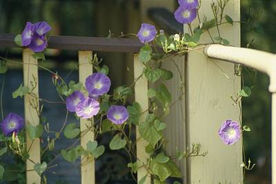 Bellefonte Wall Art - Photograph - Purple Flowers Bloom On by Stacy Gold