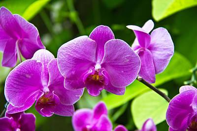 Purple Flowers In A Bunch Art Print