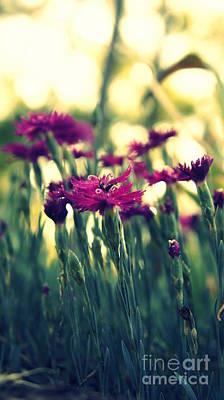 Photograph - Purple Flowers by J Kinion