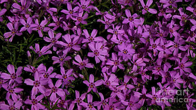 Photograph - Purple Flowers by Mareko Marciniak