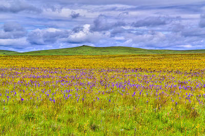 Purple Flowers On The Prairie Art Print by Jen TenBarge