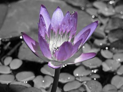 Photograph - Purple by Gal Moran