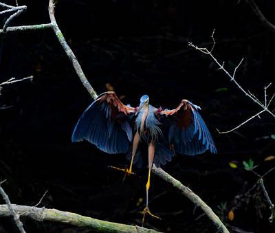 Photograph - Purple Heron Dance by Chua  ChinLeng