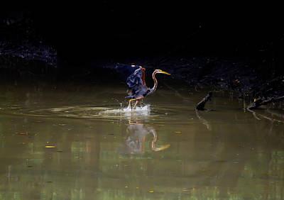 Photograph - Purple Heron Waddling by Chua  ChinLeng