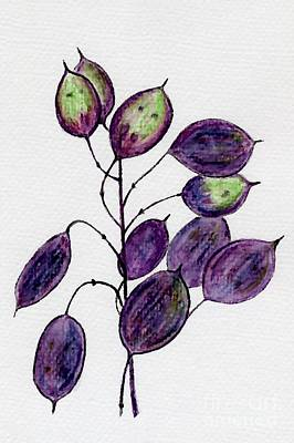 Drawing - Purple Honesty Seed Heads by Barbara Moignard