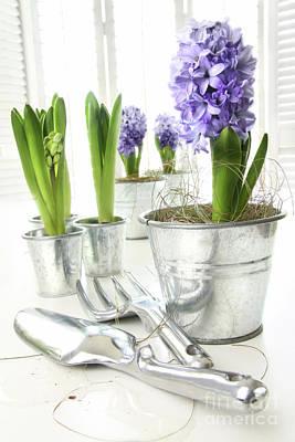 Purple Hyacinths On Table With Sun-filled Windows  Art Print by Sandra Cunningham