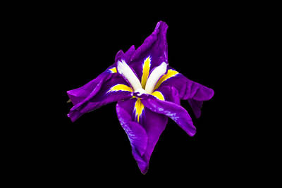 Photograph - Purple Iris by Bill Barber