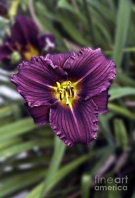 Purple Lilly Art Print
