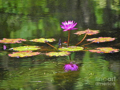 Art Print featuring the photograph Purple Lily Pad by Eve Spring