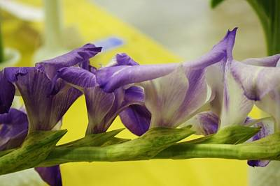Photograph - Purple Lush Gladiola by Bruce Bley