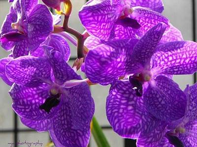 Photograph - Purple by Michelle Jacobs-anderson