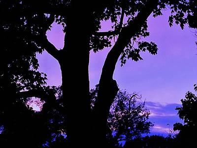 Purple Morning Art Print by Todd Sherlock