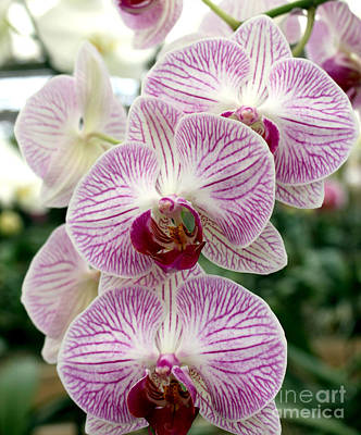 Art Print featuring the photograph Purple Orchids by Debbie Hart