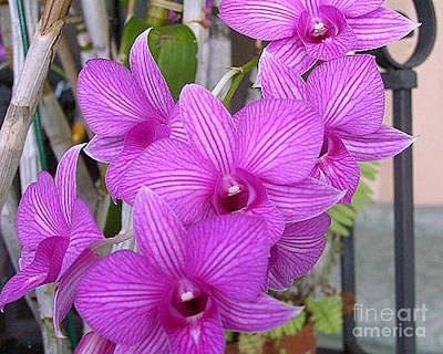 Purple Orchids Print by Merton Allen